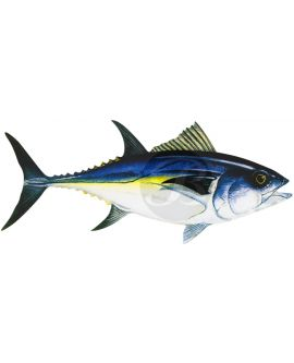 Bluefin Tuna Decal